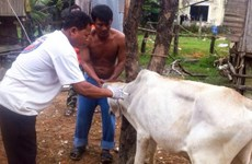 Foot-and-mouth disease breaks out in Cambodia