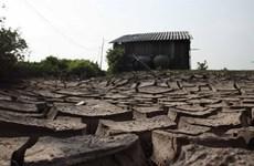 Dry season irrigation planned