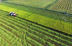 Long An invests 600 billion VND in hi-tech agricultural area