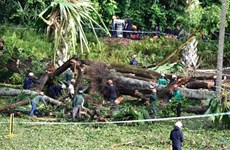 Singapore: heritage tree fall kills one, injures four