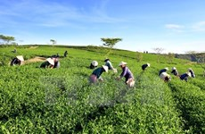 Agriculture ministry vows to push forward with SOE equitisation