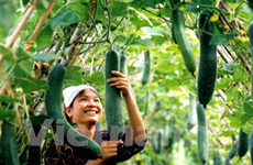 Vegetable exports rise 14 percent in January