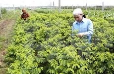 Dutch company plans vegetable seedling centre in Ha Nam