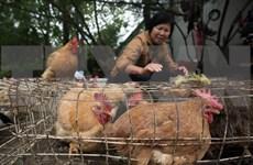Vietnam proactive to prevent A/H7N9 avian flu