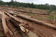 Binh Phuoc authorities apologise for forest destruction