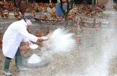 Bird flu outbreaks in neighbouring nations prompt action
