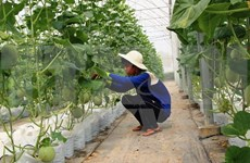 Tay Ninh approves 22 million USD fruit processing factory