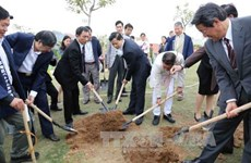 Japanese-presented cherry trees planted in Bac Ninh