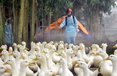 Ho Chi Minh City proactive against return of avian flu