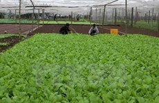 RoK helps Quang Tri develop organic farming