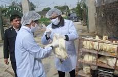 Long An intensifies cross-border A/H7N9 avian flu prevention