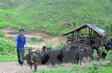 Lai Chau's Muong Te district improves local lives with WB funding