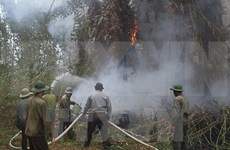 Central Highlands region works to prevent dry-season forest fire