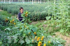 New flower trading centre to be set up