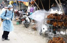 Dong Nai active in avian flu prevention