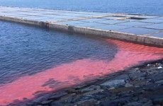 Algal bloom paints red streak in Vung Ang economic zone