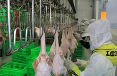 Vietnam's chicken industry takes flight