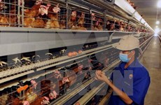 Lang Son rolls out urgent measures against avian flu