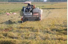 Workshop looks to promote clean production in rice value chain