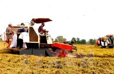 Tien Giang restructures agricultural production