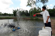 White-leg shrimp farming's profits lower than tiger prawn