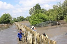 Ben Tre grapples with drought, saltwater intrusion