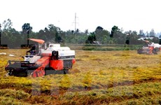 Mekong Delta farmers to be trained in sustainable rice cultivation