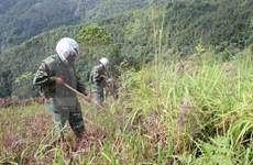 US veterans study post-war consequences in Vietnam