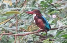 Ben En National Park moves to protect rare water birds