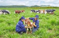 Vinamilk opens first European-standard dairy farm in Vietnam