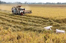 Clean rice processing cuts costs, emissions