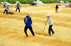 Changes to institutions urged to improve rice value chain