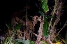 Wild elephants destroy crops in Dak Lak