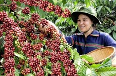 Vietnam's coffee price highest in six years