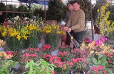 Japanese floriculture firm to invest in Lam Dong