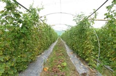 Organic agriculture seeks solutions to grow