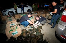 Largest-ever number of pangolins rescued in Hoa Binh province