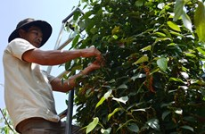 Coffee, pepper enterprises and farmers should connect well