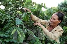 Central Highlands establishes itself as agricultural hub of Vietnam