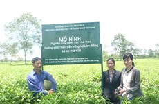 Da Nang set to build new High-tech farms