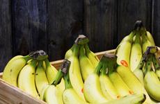 Vietnamese Camau Bananas exported to Dubai
