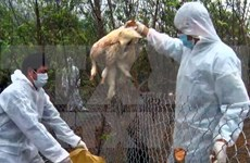 New H5N1 bird flu outbreak found in northern Cao Bang province