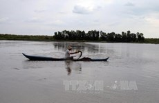 Mekong Delta farmers begin shrimp harvest
