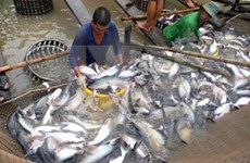 Fishery output exceeds 1 million tonnes in four months