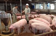 Hanoi's hi-tech farm expansion remains slow