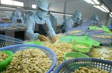 Binh Phuoc eyes more cashew products reaching global markets