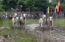 An Giang Tourism Month kicks off