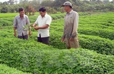 Japanese firms eye organic agriculture in An Giang