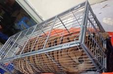 Police break wildlife trafficking ring from Nghe An to Hanoi