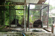 Two more Tibetan bears sent to rescue centre